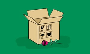 Illustration of red rose lying next to a cardboard box