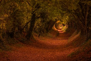 The Halnaker tree tunnel footpath in stunning autumn colour, West Sussex, England