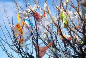 Plastic bags caught in a tree in Southport, Merseyside