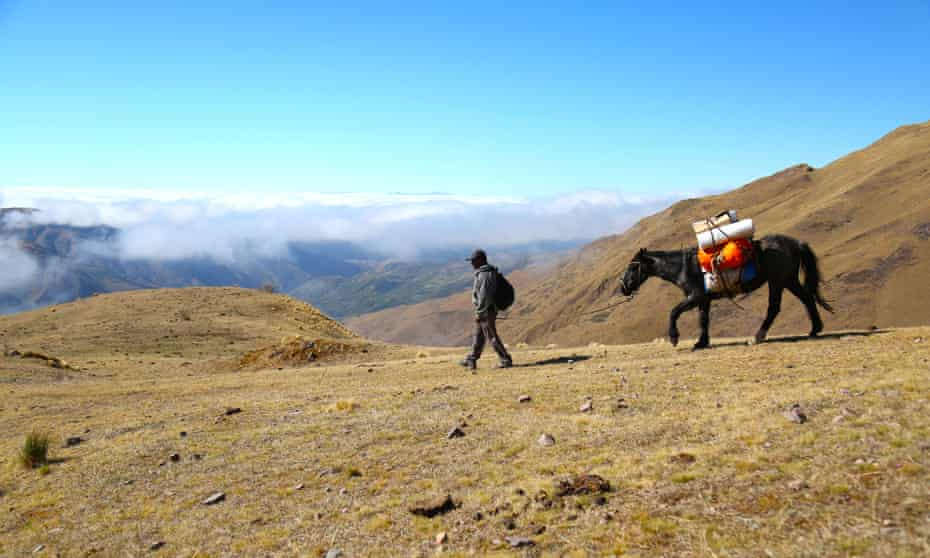 Angel Vilte with mule on the Trek to the Clouds.