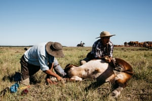 Gauchos treat cattle with ailments at Estancia Salinas in north-east Argentina
