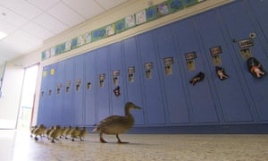 Vanessa the duck leads her brood through the halls of Village Elementary school in Hartland, Michigan.
