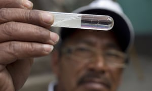 Mosquitoes larvae found during a fumigation campaign in Guatemala City. Queensland has confirmed two cases of Zika as the globe deals with the growing threat.