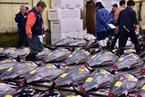Fishmongers inspect bluefin tuna before the first auction of the new year at Tokyo's Tsukiji fish market.