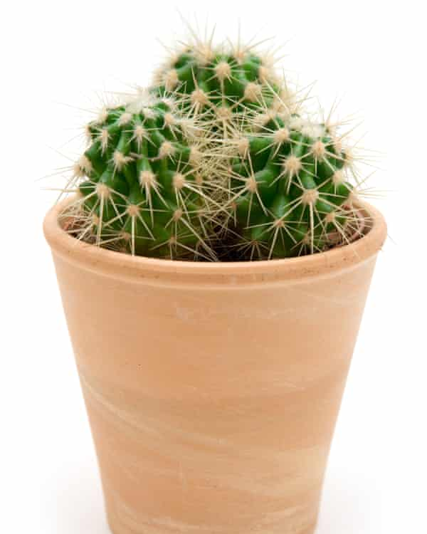 Priockly customer: cacti like it nice and bright.