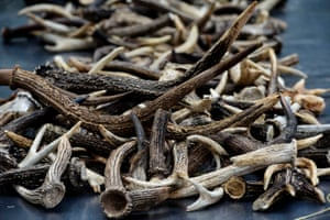 An illegal shipment of horns, antlers, dried sea horses and tortoise shells destined for China was confiscated by Indonesian police, who later burned it.