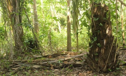 The place where the baby was found, buried near a palm tree.