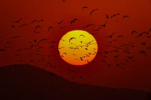 A flock of birds fly in front of the sun during sunset at the Lake Van in Turkey