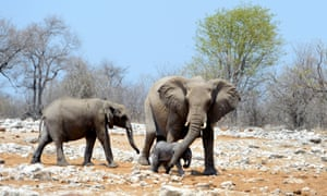 Wildlife officials in nearly 30 African states are 'appalled' by an EU decision to oppose a comprehensive global ban on the ivory trade.