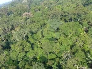 The Amazonian forest in the Putumayo basin of Loreto, Peru