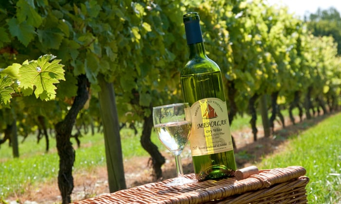 Wake up and smell the wine – UK vineyard stays | Travel | The Guardian