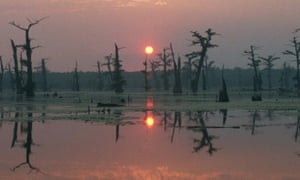 Alligator Bayou near Baton Rouge … Louisiana provides the setting for James Lee Burke's Robicheaux.
