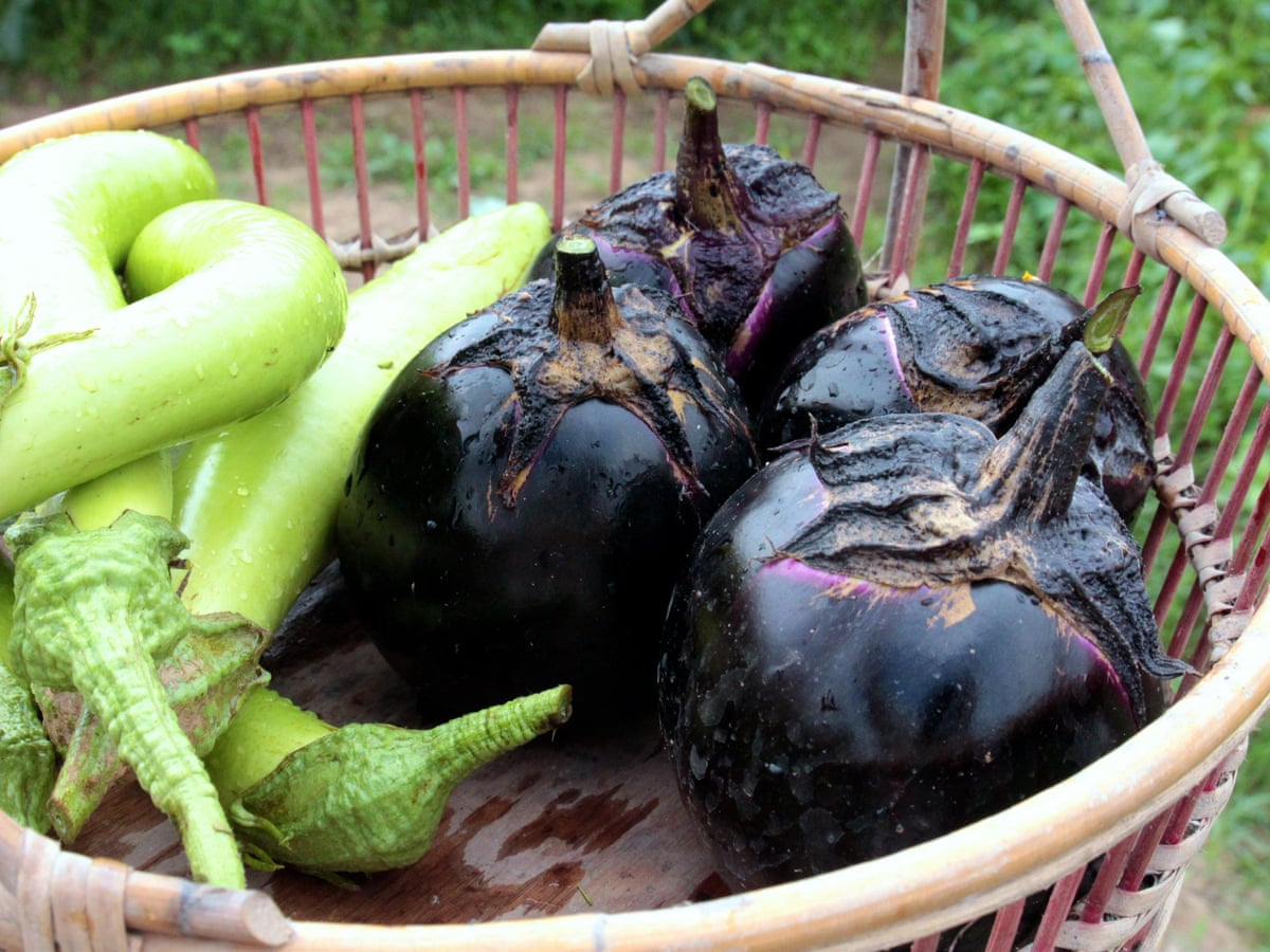 Tender And Luscious No Other Eggplant Compares To This Vegetables The Guardian
