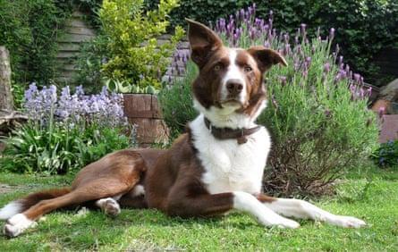 Mark Powlett's dog, Coco