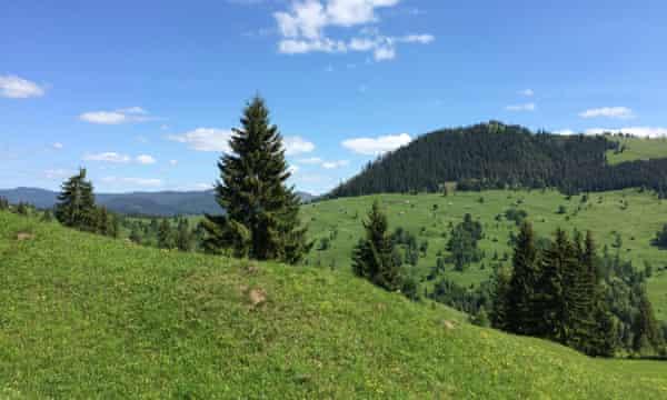 Rolling green meadows in the Carpathians.