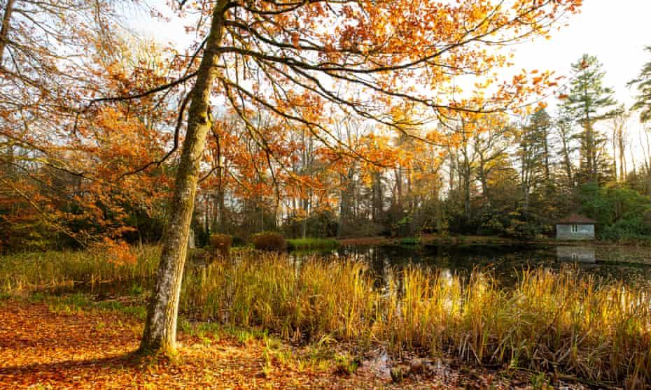 Autumn colour on the estate at Wallington, Northumberland