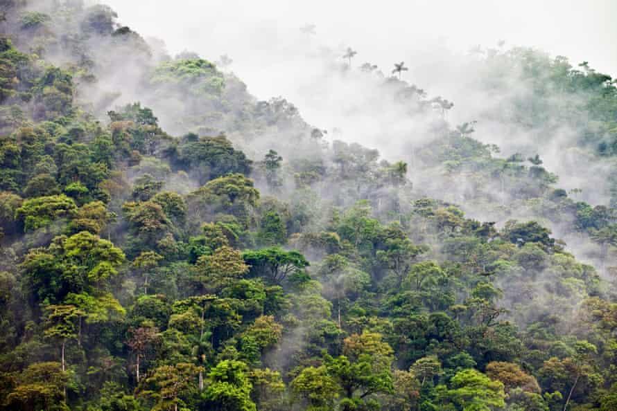 ابر و مه در جنگل دامنه کوه.