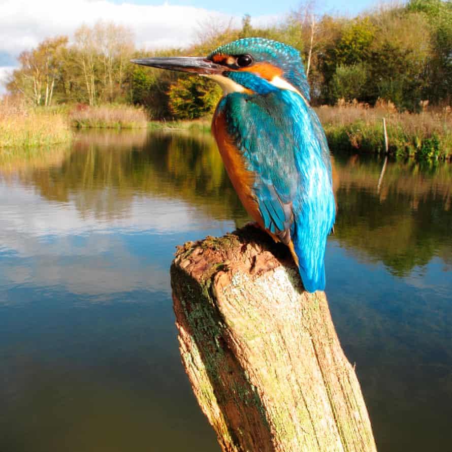 Kingfisher, Worcestershire