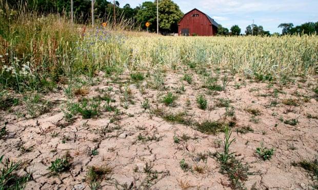 theguardian.com - Arthur Neslen - Crop failure and bankruptcy threaten farmers as drought grips Europe