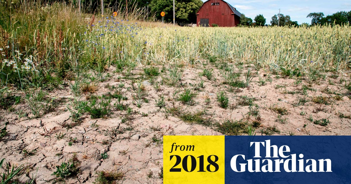 Crop failure and bankruptcy threaten farmers as drought grips Europe