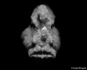 The runner-up in the monochrome category, Family Antennariidae by Andy Wingate. He says: 'A solemn-looking grey anglerfish (aka frogfish) lays still, moving only its eyes as it lies in wait for its next unsuspecting meal to swim past. This is an expert hunter that walks, swims very little, and owns one of the fastest-moving set of jaws in the underwater world.'