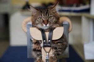 A cat awaiting treatment at the Shanghai centre