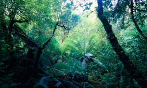 A rainforest in the Tarkine