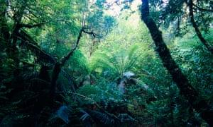 The Tarkine wilderness area in Tasmania