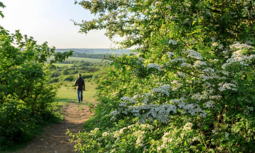 Man walking down a path lined with blossom