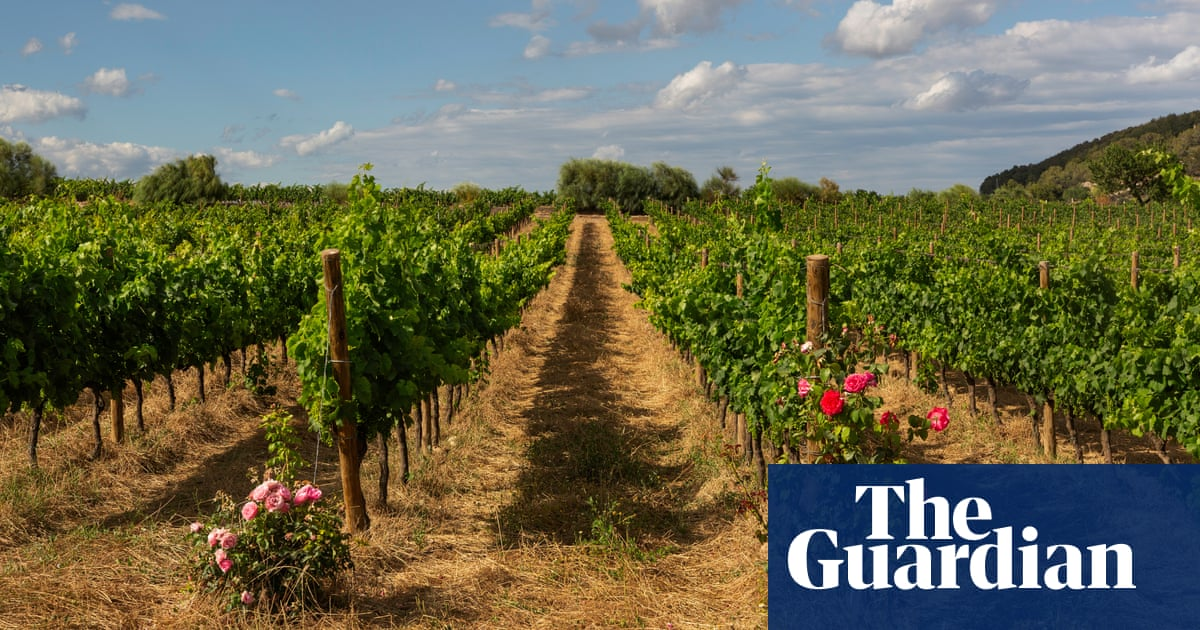 Days of wine and olives: how the old farming ways are paying off in Spain