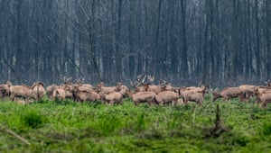 Elks at the Tian'ezhou national elk nature reserve in Shishou City, central China's Hubei Province