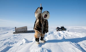 'Only take what you need': the Arctic region's Inuit communities hunt adult harp seals only.