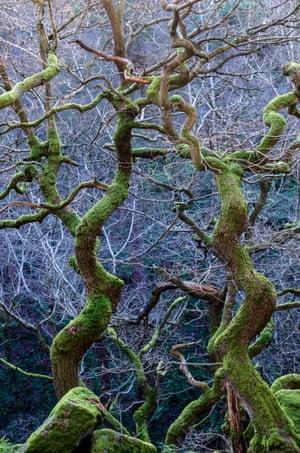 Wild woods winner: Steve Palmer, 'Twisted Green', Derbyshire, England.