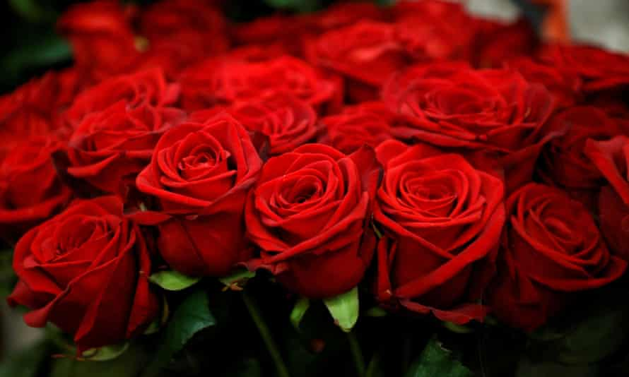 Red roses are displayed in a flower shop