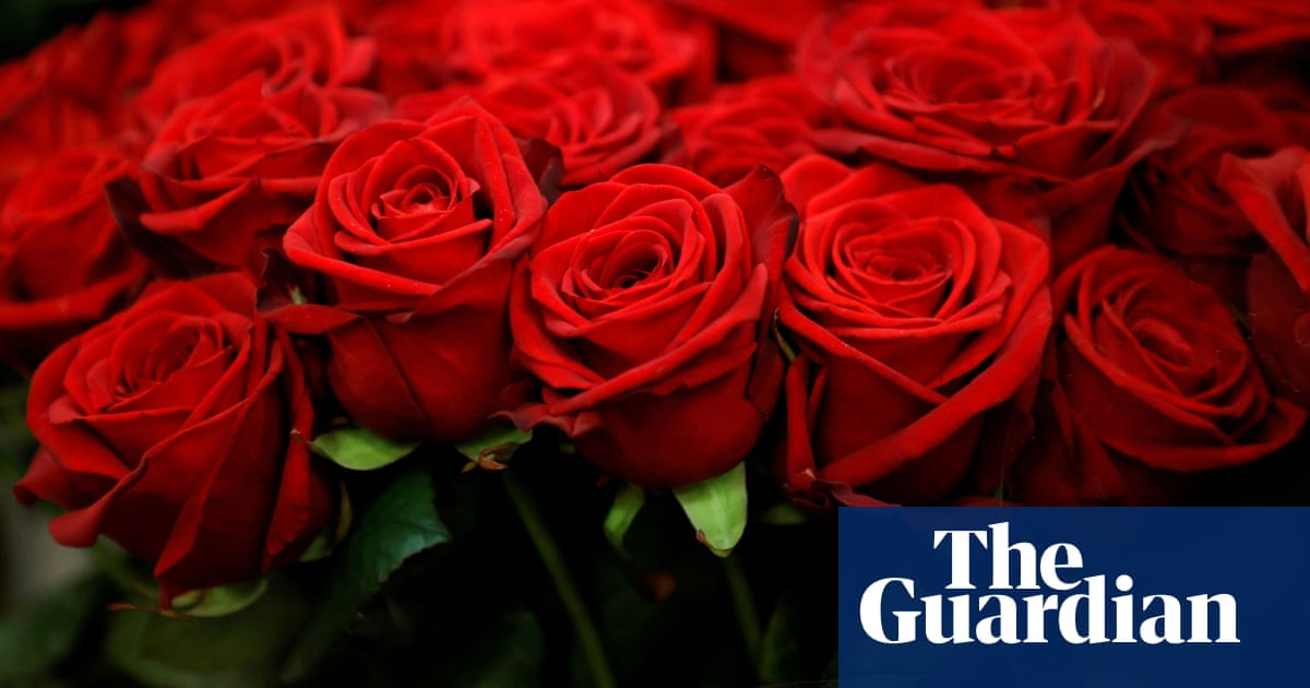 Coming up roses: business begins to bloom after Australian flower industry hit by pandemic