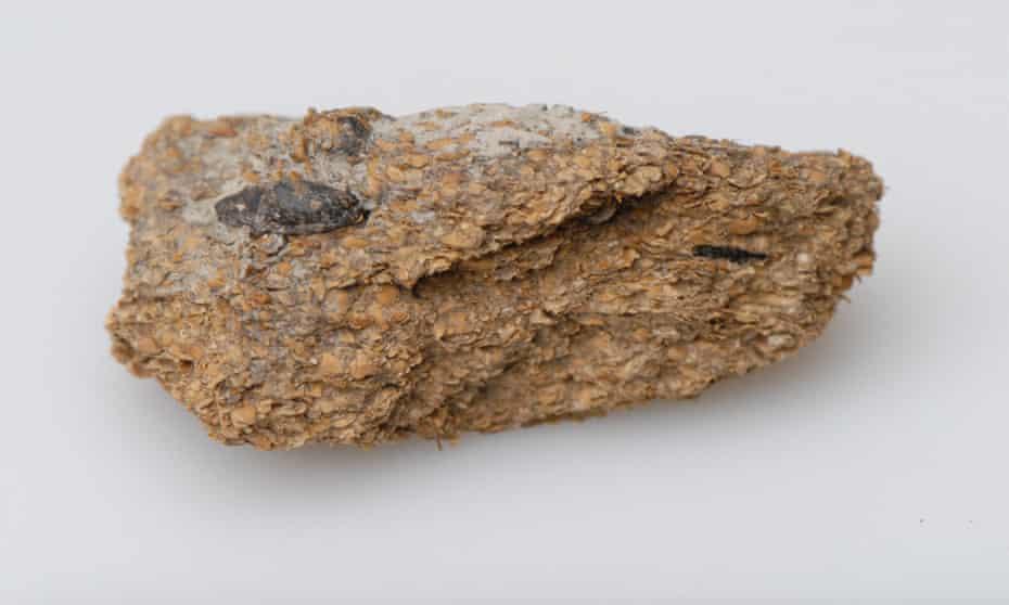 Preserved human excrement from the Hallstatt salt mines