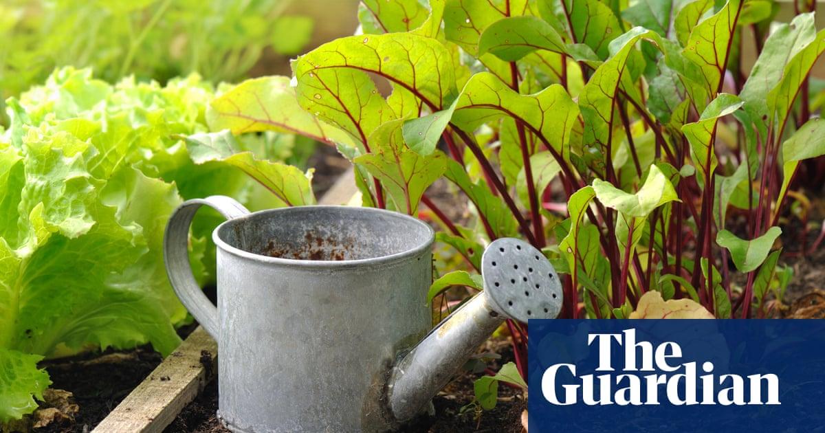 Coronavirus Gardening Boom Overwhelms Seed Suppliers In New