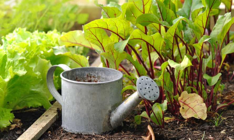 Coronavirus gardening boom overwhelms seed suppliers in New Zealand and  Australia | New Zealand | The Guardian