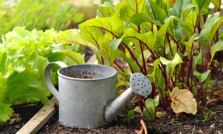 Watering can in a vegetable garden