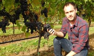 Julien Lecourt has been testing divico grapes