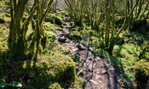 Winding rocky path in Monks Dale