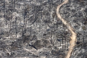 Tree ashes after Forest fires in Mato Grosso on July 06, 2008
