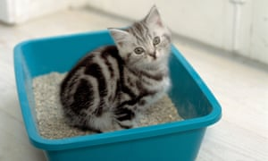 Toxoplasma gondii spreads in cat faeces to other mammals, including humans.