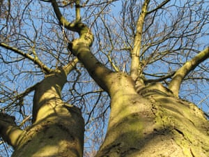 Climber S View Of A Horse Chestnut Tree Environment