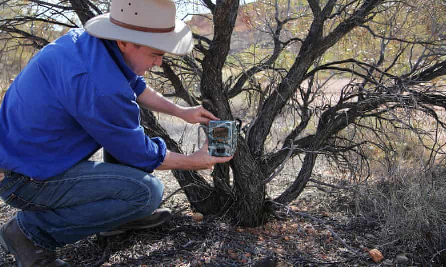 Rob Murphy, Bush Heritage Australia's north regional manager, collecting a memory card from a camera trap which makes sure people don't disturb the parrots.