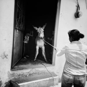 Woman pulling donkey out of house.