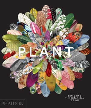 Plant : Exploring The Botanical World published by Phaidon : Cover 9780714871486