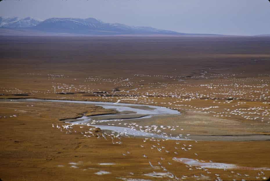 Birds migrate to this coastal plain each summer.