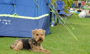 dog in front of tent