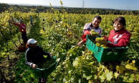 Romanian harvesters.